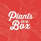Plants in a Box Pinterest Account