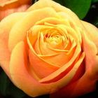 RoseMary Morton instagram Account