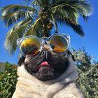 DOG LOVERS Pinterest Account