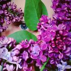 Моя коллекция референсов Pinterest Profile Picture