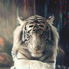 toto tiger