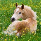 I Loves Horses Account