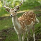 Best Mammals Blog Pinterest Account