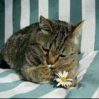 Cat Vedder Pinterest Account