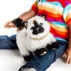 Siamese Cat Blog Pinterest Account