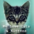 We Love Cats and Kittens Pinterest Profile Picture