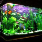 Fishy Hubs