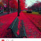 paulanyc Pinterest Account