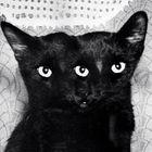 Didi Pomaski instagram Account