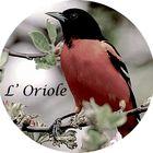 Le nid de l'Oriole Pinterest Account
