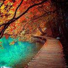 Color My Soul Pinterest Account