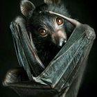 Corvus Orca Pinterest Profile Picture