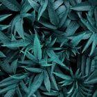 Pflanzen Pinterest Account