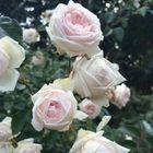 sydney ellen instagram Account