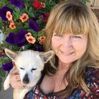 Halliday Kennels Pinterest Account