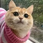 Джун-Джин Pinterest Account
