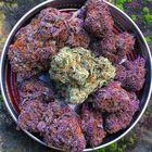 Marijuana Life Pinterest Account