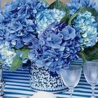 Hetty Hydrangea Pinterest Account