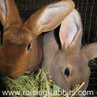 Raising-Rabbits.com instagram Account