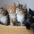 dog and cats lovers Pinterest Account