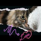 Kharina C.Van Pinterest Account