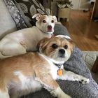 Sherry Hagar Pinterest Account