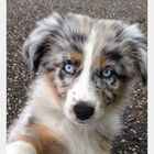 Adrie_231 Pinterest Account