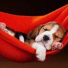 Dogs KIngdom Pinterest Account