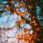 Beyza Yılmaz Pinterest Account