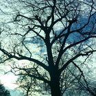 Natureluver instagram Account