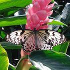 M Koulas Pinterest Account