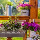 Garten & Dekor Pinterest Account