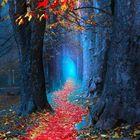 Naturbilder Wald Pinterest Account