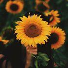 Michelle Soumas instagram Account