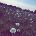 Mathura✨🥀 Pinterest Account