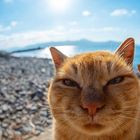 cats Pinterest Account