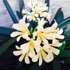 Vasantha Thota Pinterest Account