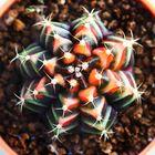 peet cactus Pinterest Account