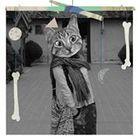 Ton Suthi Pinterest Account
