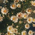 ✨Void✨ Pinterest Account
