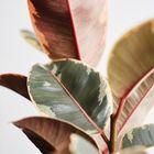 Ansel & Ivy Pinterest Account