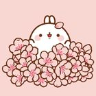 Dreamy Rabbit Account