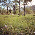 Fiorella Fortado instagram Account