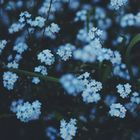 🌼Lady Littiah🌼 Pinterest Account