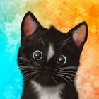 Felini Pinterest Account
