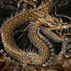 Dragon ZINZ Pinterest Account
