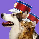 Pet Parade instagram Account