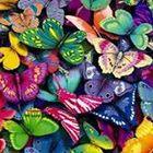 Edyta Dabrowska Pinterest Account