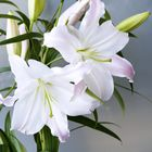 fleur de lys instagram Account