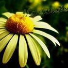 Angelina Artlo Pinterest Account